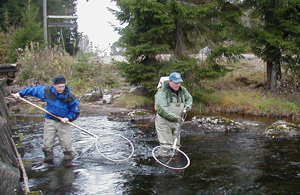 fiskeri med ruser